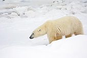BEA 06 DA0013 01