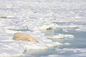 BEA 06 DA0014 01