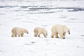 BEA 06 DA0017 01