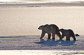 BEA 06 DA0018 01