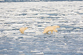 BEA 06 DA0020 01
