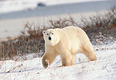 BEA 06 GL0001 01