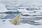 BEA 06 KH0023 01