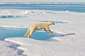 BEA 06 KH0041 01