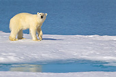 BEA 06 KH0042 01
