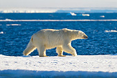 BEA 06 KH0046 01