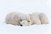 BEA 06 NE0120 01