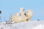 BEA 06 NE0121 01