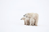 BEA 06 NE0123 01