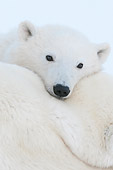 BEA 06 NE0126 01