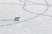 BEA 06 NE0128 01