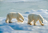 BEA 06 NE0133 01