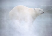 BEA 06 NE0134 01