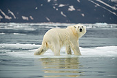 BEA 06 SK0089 01