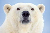 BEA 06 SK0155 01