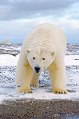 BEA 06 SK0158 01