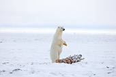 BEA 06 SK0159 01