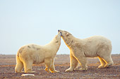 BEA 06 SK0162 01
