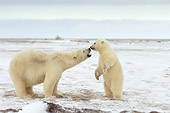 BEA 06 SK0163 01