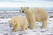 BEA 06 SK0165 01