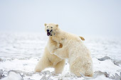 BEA 06 SK0166 01