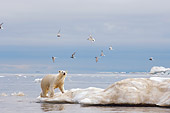 BEA 06 SK0168 01