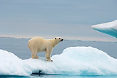 BEA 06 SK0175 01