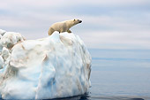 BEA 06 SK0177 01