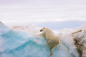BEA 06 SK0180 01