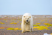 BEA 06 SK0188 01