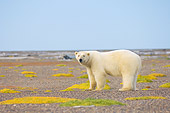 BEA 06 SK0189 01