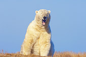 BEA 06 SK0191 01