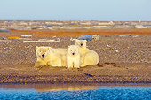 BEA 06 SK0197 01