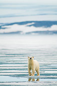 BEA 06 SK0244 01