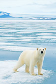 BEA 06 SK0245 01