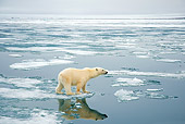 BEA 06 SK0247 01