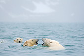 BEA 06 SK0254 01