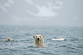 BEA 06 SK0260 01