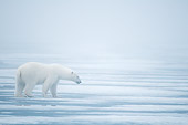 BEA 06 SK0261 01