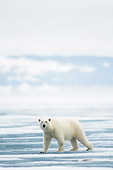 BEA 06 SK0263 01