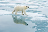 BEA 06 SK0264 01