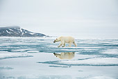 BEA 06 SK0267 01