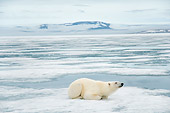 BEA 06 SK0269 01