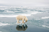 BEA 06 SK0274 01