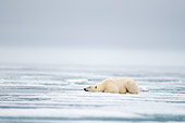BEA 06 SK0275 01