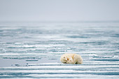 BEA 06 SK0276 01