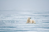 BEA 06 SK0277 01