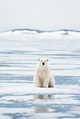 BEA 06 SK0280 01
