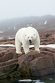 BEA 06 SK0283 01