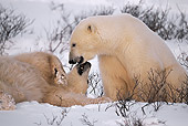BEA 06 HB0004 01